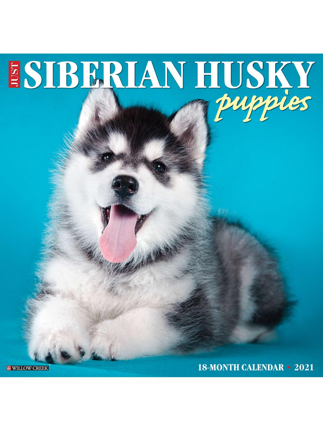 Willow Creek Calendar Siberian Husky Puppies Office Depot
