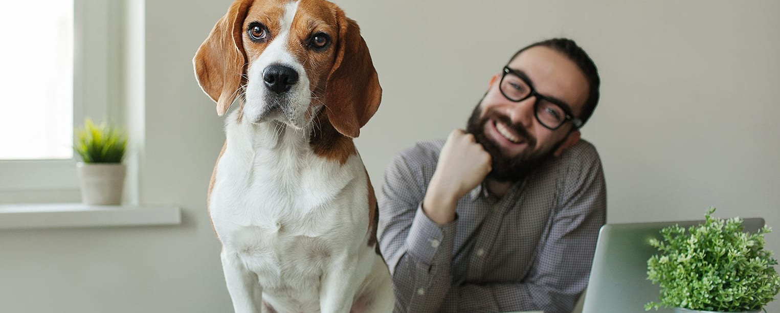 """Pet Project: How """"Take Your Dog to Work Day"""" Can Improve Your Workplace"""