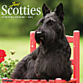 """Willow Creek Press Animals Monthly Wall Calendar, Scottish Terriers, 12"""" x 12"""", January To December 2021"""