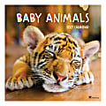 """TF Publishing Animals Monthly Wall Calendar, 12"""" x 12"""", Baby Animals, January To December 2021"""