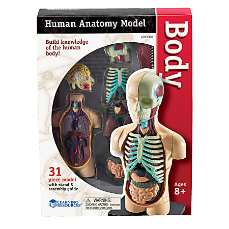 """Learning Resources® Model Human Body Anatomy Set, 4 1/2"""", Grades 3 - 12"""