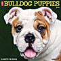 "Willow Creek Press Animals Monthly Wall Calendar, Bulldog Puppies, 12"" x 12"", January To December 2021"