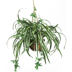 """Nearly Natural 27"""" Silk Hanging Spider Plant With Basket"""