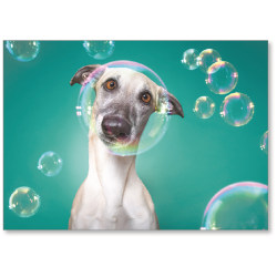 "Viabella Blank Note Greeting Card, Dog, 5"" x 7"", Multicolor"