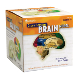 """Learning Resources® Human Brain Cross Section Model, 5 1/2"""" x 6"""", Grades 6 - 12"""