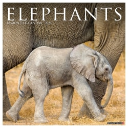 "Willow Creek Press Animals Monthly Wall Calendar, Elephants, 12"" x 12"", January To December 2021"