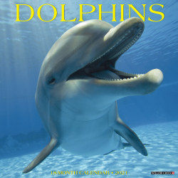 """Willow Creek Press Animals Monthly Wall Calendar, Dolphins, 12"""" x 12"""", January To December 2021"""