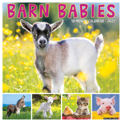 "Willow Creek Press Animals Monthly Wall Calendar, Barn Babies, 12"" x 12"", January To December 2021"