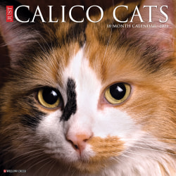 """Willow Creek Press Animals Monthly Wall Calendar, Calico Cats, 12"""" x 12"""", January To December 2021"""