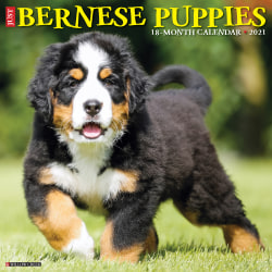 """Willow Creek Press Animals Monthly Wall Calendar, Bernese Mountain Dog Puppies, 12"""" x 12"""", January To December 2021"""