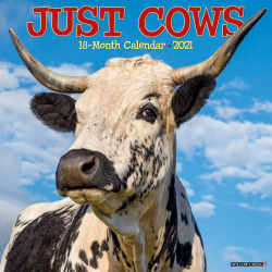 """Willow Creek Press Animals Monthly Wall Calendar, Cows, 12"""" x 12"""", January To December 2021"""