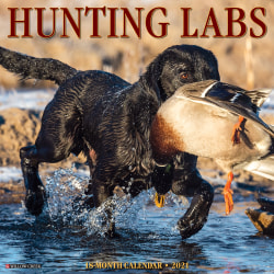 """Willow Creek Press Animals Monthly Wall Calendar, Hunting Labs, 12"""" x 12"""", January To December 2021"""