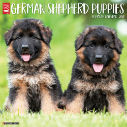 "Willow Creek Press Animals Monthly Wall Calendar, German Shepherd Puppies, 12"" x 12"", January To December 2021"