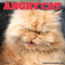 """Willow Creek Press Animals Monthly Wall Calendar, Angry Cat, 12"""" x 12"""", January To December 2021"""