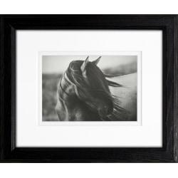 """Timeless Frames Supreme Framed Animal Artwork, 8"""" x 10"""", Black, Fierce Grace"""