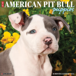 "Willow Creek Press Animals Monthly Wall Calendar, Pit Bull Puppies, 12"" x 12"", January To December 2021"