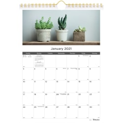 """Blueline Succulent Plants Wall Calendar - Monthly - 1 Year - January 2021 till December 2021 - 1 Month Single Page Layout - Twin Wire - Multi, Gold - Chipboard - 11"""" Height x 8"""" Width"""