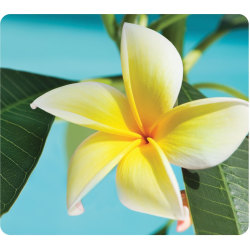"""Fellowes Recycled Optical Mouse Pad - Yellow Flower - Yellow Flower - 8"""" x 9"""" x 0.06"""" Dimension - Multicolor - Rubber Base - Skid Proof - 1 Pack"""