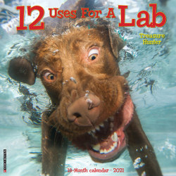 "Willow Creek Press Animals Monthly Wall Calendar, 12 Uses For A Labrador Retriever, 12"" x 12"", January To December 2021"
