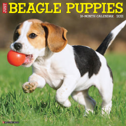 """Willow Creek Press Animals Monthly Wall Calendar, Beagle Puppies, 12"""" x 12"""", January To December 2021"""