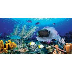 """Biggies Wall Mural, 27"""" x 54"""", Ocean Reef"""