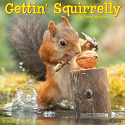 """Willow Creek Press Animals Monthly Wall Calendar, Getting Squirrelly, 12"""" x 12"""", January To December 2021"""