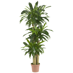 """Nearly Natural 57""""H Real-Touch Silk Corn Stalk Dracaena Plant With Pot, Green"""