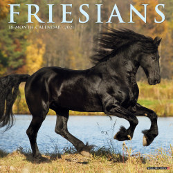 "Willow Creek Press Animals Monthly Wall Calendar, Friesians, 12"" x 12"", January To December 2021"