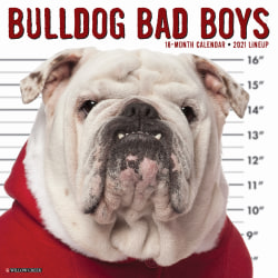 "Willow Creek Press Animals Monthly Wall Calendar, Bulldog Bad Boys, 12"" x 12"", January To December 2021"