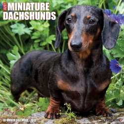 "Willow Creek Press Animals Monthly Wall Calendar, Miniature Dachshunds, 12"" x 12"", January To December 2021"