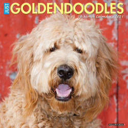 """Willow Creek Press Animal Monthly Wall Calendar, 12"""" x 12"""", Goldendoodles, January To December 2021"""