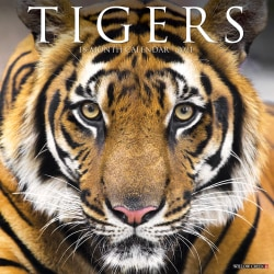 """Willow Creek Press Animals Monthly Wall Calendar, Tigers, 12"""" x 12"""", January To December 2021"""