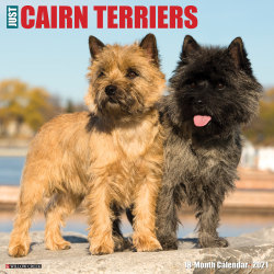 """Willow Creek Press Animals Monthly Wall Calendar, Cairn Terriers, 12"""" x 12"""", January To December 2021"""
