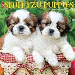 "Willow Creek Press Animals Monthly Wall Calendar, Shih Tzu Puppies, 12"" x 12"", January To December 2021"