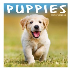 "TF Publishing Mini Wall Calendar, 7"" x 7"", Puppies, January to December 2021"