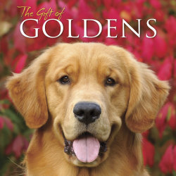 """Willow Creek Press 5-1/2"""" x 5-1/2"""" Hardcover Gift Book, The Gift Of Goldens"""