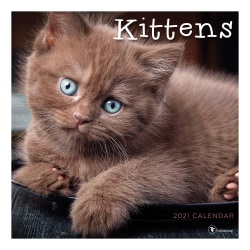 """TF Publishing Animals Monthly Wall Calendar, 12"""" x 12"""", Kittens, January To December 2021"""