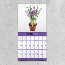 TF Publishing Mini Scenic Wall Calendar