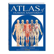 QuickStudy Atlas Of Human Anatomy