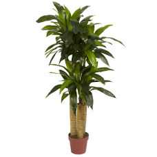 Nearly Natural 4 Polyester Artificial Dracaena