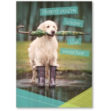 Viabella Get Well Greeting Card Dog