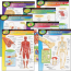 Trend Learning Chart Pack The Human
